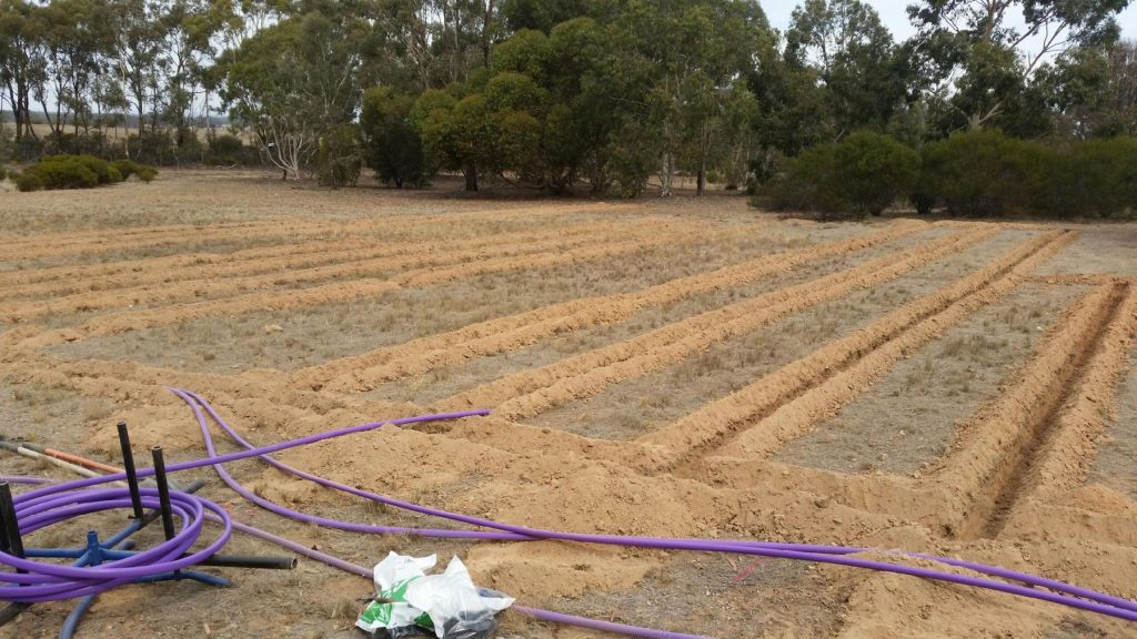 Drip irrigation field